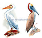 B01 ~ Brown & White Pelicans on Ceramic Decals, 2 sizes & 2 designs, Water Bird image