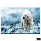Polar Bear   Animals BOX FRAMED CANVAS ART Picture HDR 280gsm