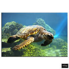 Sea Turtle   Animals BOX FRAMED CANVAS ART Picture HDR 280gsm