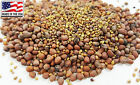 MICROGREEN ANTI CURE CANCER SPROUTING SEED Red Clover Daikon Radish Alfalfa USDA