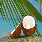 Coconut Fragrance Oil Soap & Candle Making Supplies **Free Shipping**
