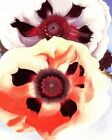 GEORGIA OKEEFFE POPPIES FINE ART PRINT