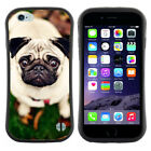 Anti-Shock Tpu Case Bumper Cover For Apple iPhone White pug dog with round eyes