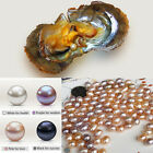SELLING LOT 5/10/25/50 PCS PACKAGING AKOYA OYSTERS WITH BIG FAUX PEARLS SAUCY