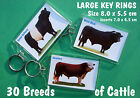 LARGE KEY RINGS.... 30 Breeds of Cattle