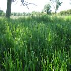 Sweet Grass Fragrance Oil Candle/Soap Making Supplies Free Shipping