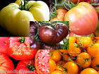 Serendipity's Heirloom Rainbow Tomato mix collection 50 seeds Packed separate