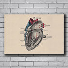 Human Body Structure Anatomy Information Heart Anatomy 21 27x40 Poster Art T-386