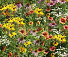 Serendipity's Midwestern Garden Wildflower seed Mix Lots of Color! Bulk Seeds