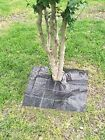 Agfabric Easy-Plant Weed Block Mulch,Tree Mat with 63 Pegs,Weed Barrier Mat