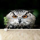 Paper Wall Mural Photo Wallpaper Poster Picture Image Owl Bird