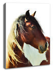 BROWN HORSE FRAMED CANVAS PRINT, GALLERY STRETCHED POSTER, ANIMAL ART PHOTOGRAPH