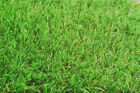 Luxury Lawn Off Cuts Various Sizes 4m Roll Lengths
