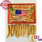 Sale 4-16oz Hand Select American Wisconsin Ginseng Root Long Root Grade A+ W/BOX $14.5 USD on eBay