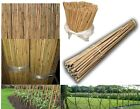 2ft/3ft/4ft/5ft/6f/7ft Heavy Duty Natural Bamboo Wooden Thick Canes Garden Cane