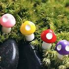 10 Stück Mini Mushroom Miniaturen Set Fairy Garden Dekor Ornament S2s8 X1x1