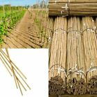 6ft High Quality Bamboo Canes Thick Strong Garden Plant Support Wood Pole Sticks