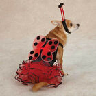 Casual Canine  LUCKY BUG Lady Bug Dog Pet Halloween Costume