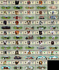 Free Selectable Dog Breeds 1.000.000,00 $! Poodle & Co.! SUPER
