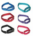 Bulk Lot Martingale Dog Collars at Wholesale Prices Nylon Dog Collar Multi Packs