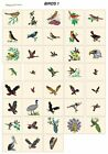 BIRDS 1. CD or USB machine embroidery designs files many formats pes jef hus etc