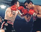 "Ray ""Boom Boom"" Mancini Boxing Action Photo NU203 (Select Size)"