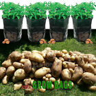Potato Grow Planting Bag Planter - Potatoes Sack Spuds Garden Patio - 36 x 51cm