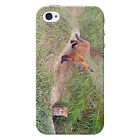 Red Fox Cubs Protective Snap on iPhone 4 Case  / Cover