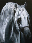 'Peace' Canvas Arab horse head print black and white by Jessica Hill