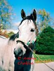 COLOR PHOTO - 8x10 Holy Bull  at Jonabell Farm - 1994 Horse of The Year (2)