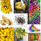100X Special Multi-color Dwarf Banana Seeds Bonsai Tree Potted Seed Garden Plant