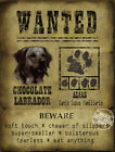 :DOG WANTED POSTER CHOCOLATE LABRADOR METAL PLAQUE  3 SIZES TO CHOOSE FROM
