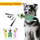 Durable Teeth Cleaning Puppy Interactive Screaming Chicken Pet Toys Bite Toy