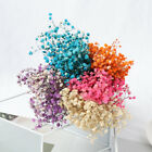 Natural Dried Bouquets Babysbreath Real Flower Natural Material Home Decoration