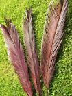 Pack 3 Dry BROWN Fern Leaves, Indoor decoration, A2077