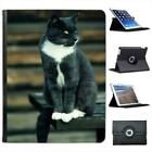 Grey & White Short Hair Cat On Park Bench Folio Leather Case For iPad 2, 3 & 4