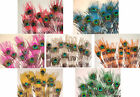 """12 Striped Peacock Eyes Feathers Dyed 30-35"""" L 7 colors"""
