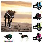 Julius-K9® Powerharness For Dogs Mini 51 to 67 cm