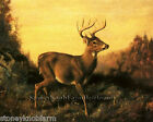 Buck Deer in Landscape ~ Forest Animals ~ Counted Cross Stitch Pattern
