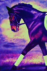 Giclee HORSE PRINT DRESSAGE Art CAPER by artist BETS 5 COLORS print size 14 X 19