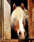 Watching from the Barn Stall ~ Horses ~ Cross Stitch Pattern
