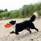 Dog Toy Frisbee Dog Disc 22 cm Thermoplastic Rubber Floatable Robust Bright