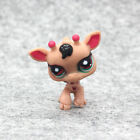 Rare Hasbro*Littlest Pet Shop*Brown Cat Dogs Bird Big Eyes LPS Toys Gifts Lots