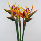 Artificial Bird Of Paradise Flowers Vivid Strelitzia Wedding Home Decor 90cm