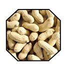 Monkey Nuts- Peanuts in shell- Wild bird feed- Squirrel- Parrot