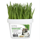 3 x Grow Your Own Cat Grass Kit - Organic Cat Grass Kit by My Cat Grass