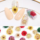 3D Nail Art Real Dried Flowers Nail Art Decoration Sun Dry Flower Tips Stickers