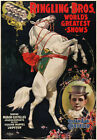 TZ66 Vintage Ringling bros Horse Show Circus Carnival Poster Re-Print A4