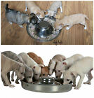 1 Trixie Silver Stainless Steel Weaning Litter Bowl Dish Feeder Food Puppy Bowl