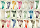 "100 Peacock Sword Feathers 20-25"" L Bleached & Dyed 21 in colors  USA Seller"